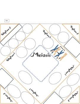 Meiosis Foldable