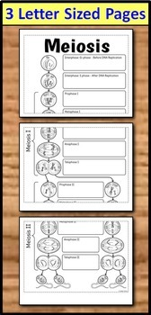 Meiosis Foldable - Big Foldable for Interactive Notebooks or Binders