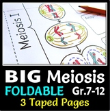 Meiosis Foldable - Big Foldable for Interactive Notebooks
