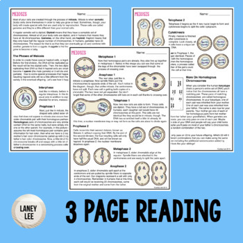 Meiosis - Guided Practice
