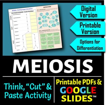Meiosis - Interactive Think Cut and Paste Activity