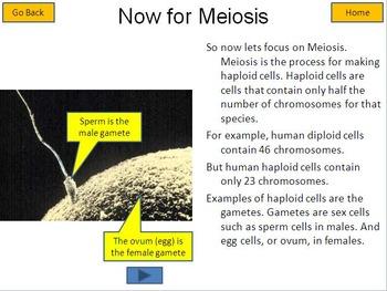 Meiosis Interactive Tutorial