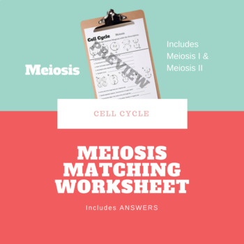 Meiosis Matching Worksheet by The Learning Hypothesis Store | TpT
