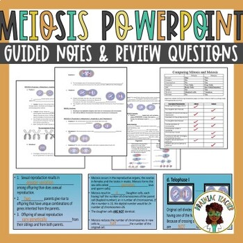 Meiosis Notes and PowerPoint