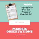 Meiosis Observations Worksheet