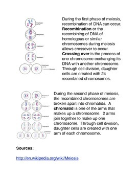 Meiosis: Producing Gametes Common Core Activity