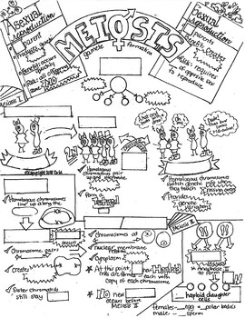 Meiosis Sketch Notes Doodle Notes W/Teacher's Guide & Student Notes!--UPDATED!!
