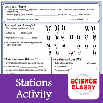 Meiosis Stations Activity