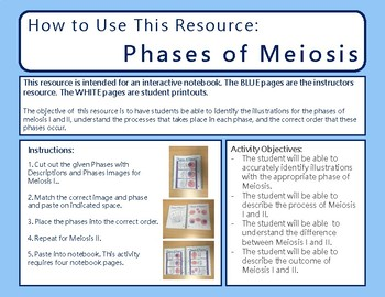 Meiosis Vocabulary and Phases Activity