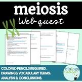 Meiosis Web Quest- Internet Lesson