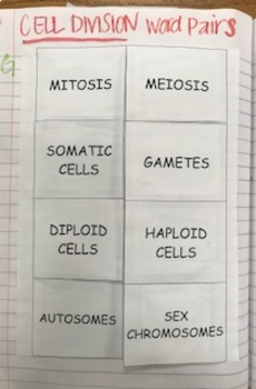 Cell Division Word Pairs Card Sort/Foldable