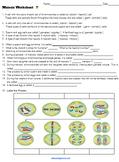 Meiosis Worksheet (Key)