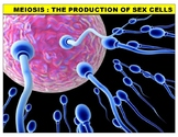 Meiosis (YouTube Vodcast Notes)