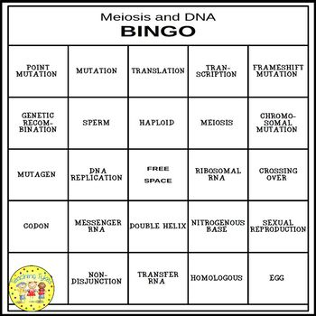 Meiosis and DNA BINGO