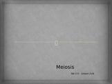 Meiosis and Gameteogenesis