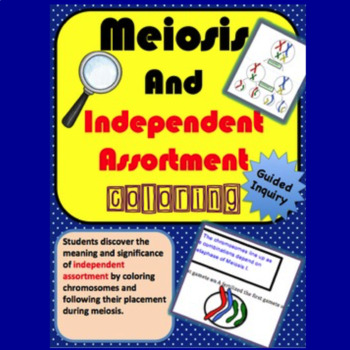Meiosis and Independent Assortment Coloring Activity