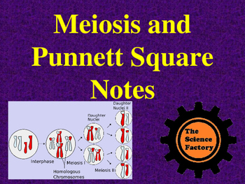Meiosis and Punnett Square Notes PowerPoint