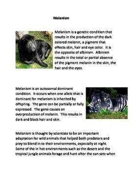 Melanism