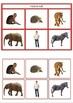 Animal Groups Matching Cards