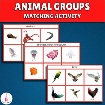 Animal Groups Matching Activity