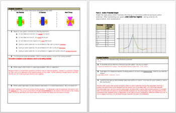 Membrane Potential: Graphing and Interpreting