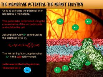 Membrane Potential in a Neuron