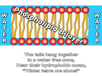 Membranes! Powerpoint for class presentation