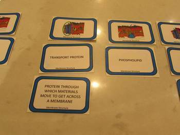 Membranes and Transport - Card Sort - Three Way Thinking Activity