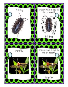 Memory (Silly Spiders) Card Game: Insects, Spiders, Counting w/ Real Photos