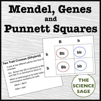 Mendel, Genes, and Punnett Squares Powerpoint