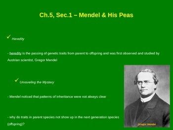 Mendel & His Peas