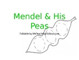 Mendel & His Peas Foldable -Editable PowerPoint