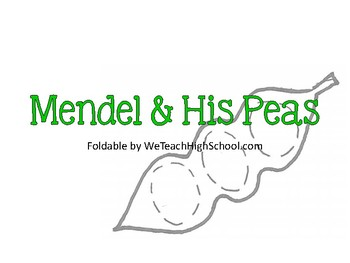 Mendel & His Peas Foldable - PDF by We Teach High School | TpT