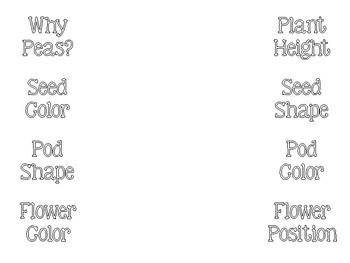 Mendel & His Peas Foldable - PDF