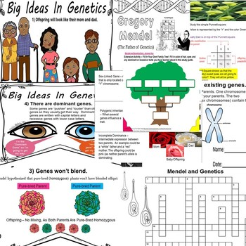 Mendel & Genetics Biology Life Science Quiz SPED Autism/ODD/OHI/SLP/ELD