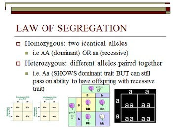 Mendel and the Gene IdeaChromosomal Basis of Inheritance