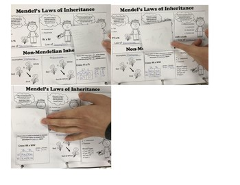Mendel's Laws and Non-Mendelian Interactive Notebook Activity