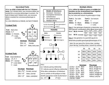 Mendelian Genetics Anchor Chart EOC Review