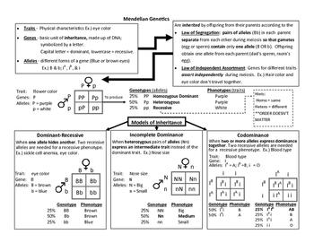 mendelian genetics anchor chart eoc review by sanford science tpt. Black Bedroom Furniture Sets. Home Design Ideas