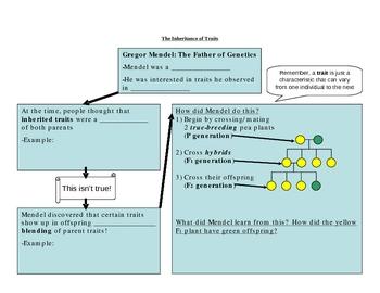 Mendelian Genetics Graphic Organizer handout