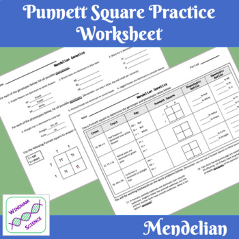 Mendelian Genetics Punnet Square Worksheet
