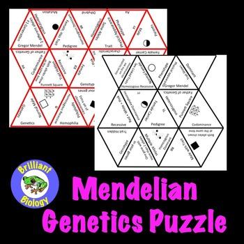 Mendelian Genetics Puzzle