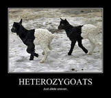 Mendelian Genetics Unit: Lesson 4: Homozygous & Heterozygous