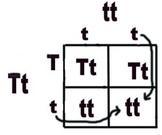 Mendelian Genetics Unit: Lesson 6: Intro to Punnet Squares