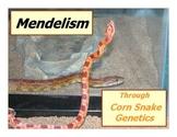 Mendelism through Corn Snake Genetics Lab Activity