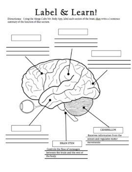 Merge Cube - Mr. Body Brain Scavenger Hunt