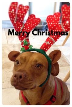 Merry Christmas from Daisy