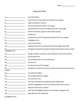Mesozoa and Parazoa Vocabulary Quiz or Worksheet for Zoology
