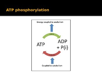 Metabolic Reactions- Cellular respiration, redox reactions, Glycolysis