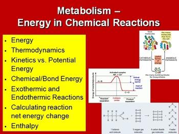 Metabolism: Energy In Chemical Reactions - Biology PowerPo